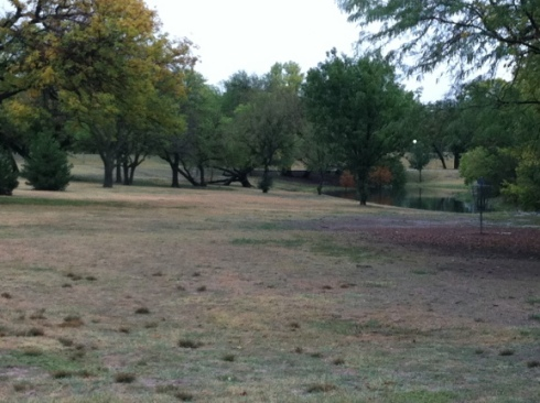 picture of park with trees and pond