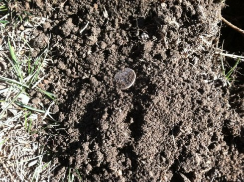 1943 Mercury dime still in the soil